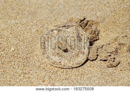 Travel to island Koh Lanta Thailand. Transparent jellyfish on the sandy beach.