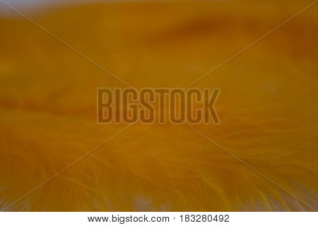 This is a photograph of Orange craft feathers background