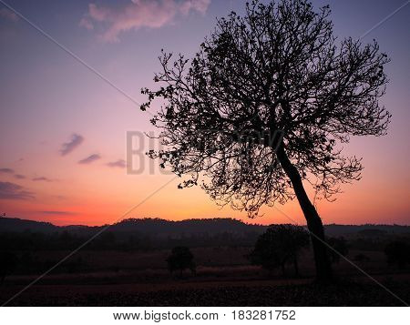 A lonely tree and sunset. Beautiful sky
