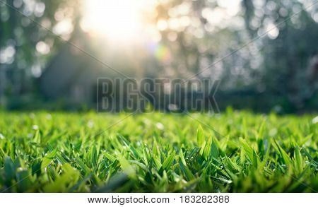 Close up of grass field with depth of field
