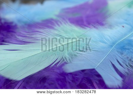 This is a photograph of Blue,Green and Purple craft feathers background