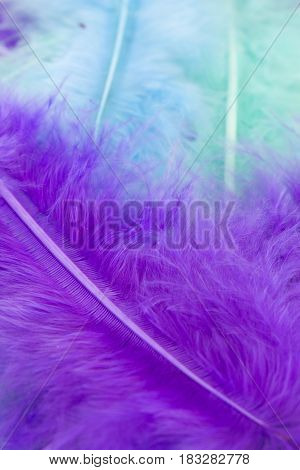 This is a photograph of Blue, Green and Purple craft feathers background
