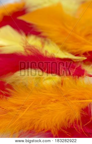 This is a photograph of Yellow,Red and Orange craft feathers background