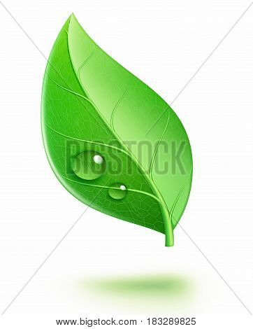 Vector illustration of ecology concept icon with glossy green leaf