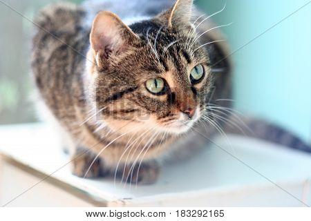 Cute cat looks away. A fluffy beast sits on a stool