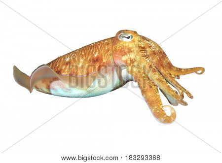 Live Cuttlefish (Sepia) fish isolated on white background