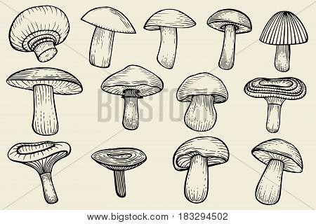 Compilation of vector illustrations of mushrooms collected. Vector illustration