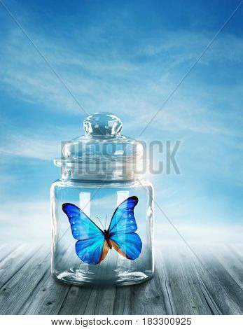 Blue butterfly closed in a jar