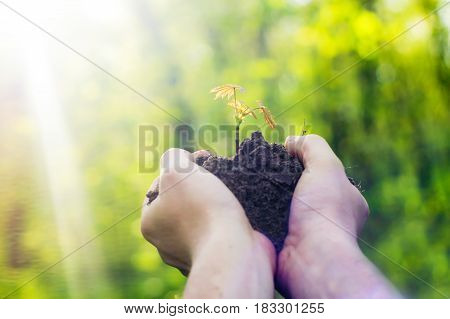 Hands hold a young plant. Concept of ecology