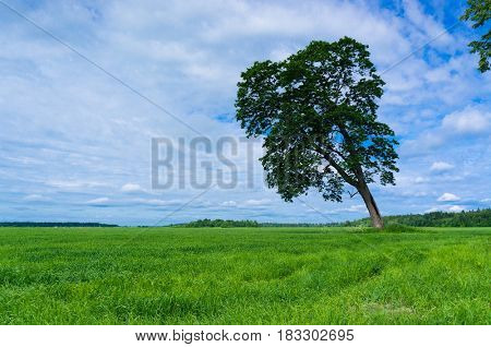 Lonely Tree Nobody Outside