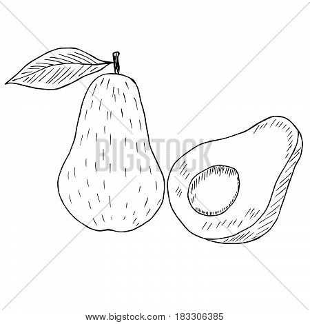 Hand drawn ink avocado isolated on white background. Fruits sketch elements.