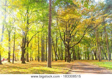 Idyllic Nature Natural Background