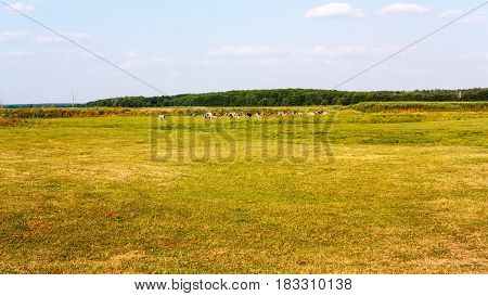 Rural country landscape with bunch on pasture