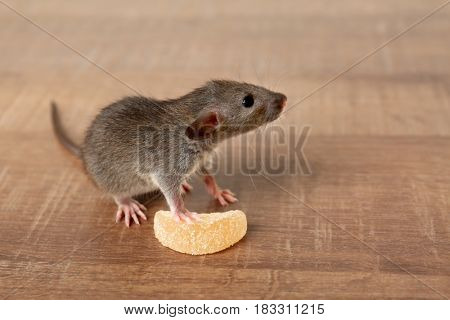 Cute funny rat and tasty candy on wooden table