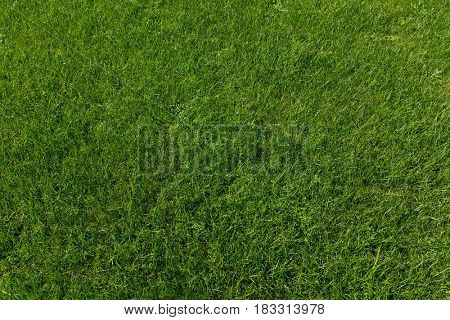 Fresh new green grass lawn