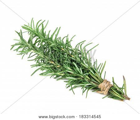 the green Rosemary bound on white background
