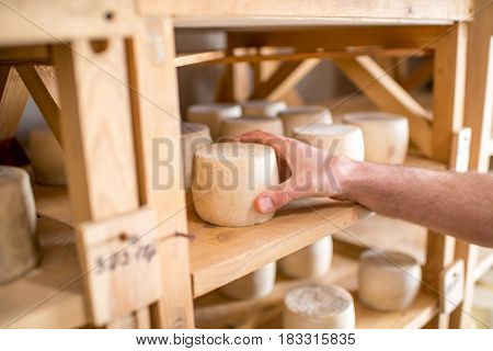 Man taking a goat cheese from the wooden self at the cellar