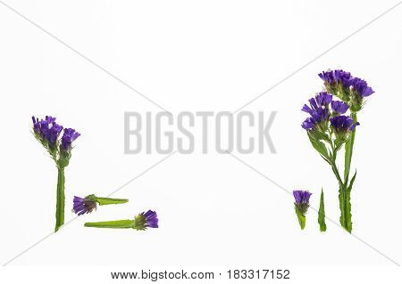arrangement of isolated purple statice flowers on white background
