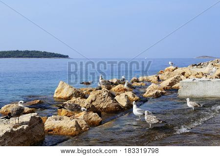It is a flock of gulls on a pier on the Adriatic coast.