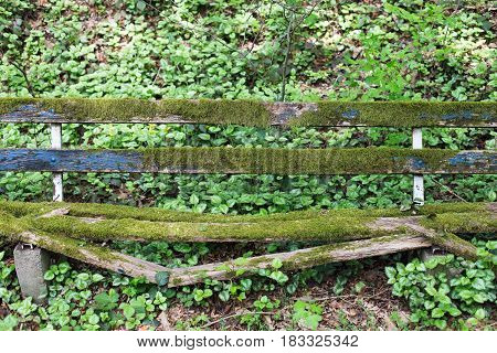 Old wooden bench with moss in a forest