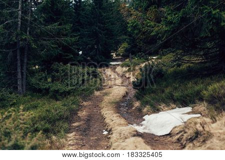 sandy road by pine forest Ukraine with snow