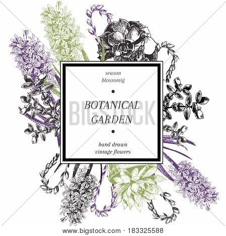 Vector hand drawn blossoms poster. Engraved botanical art. Vintage illustration. Hyacinth and succulents spring and summer blossoms. Botanic garden. Use for wedding card party invitation