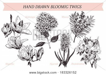 Vector hand drawn spring blossoms poster. Engraved botanical art. Vintage illustration. Mimosa hyacinth magnolia rhododendron hydrangea. Use for wedding card party invitation