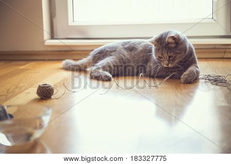 Beautiful playful tabby cat lying on the living room floor playing with a ball of string