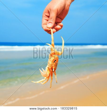 Man Catches A Crab On The  Beach.