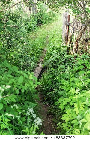 Country footpath in green nature at summer light day