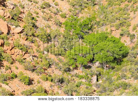 Vegetation In The Colorado National Monument