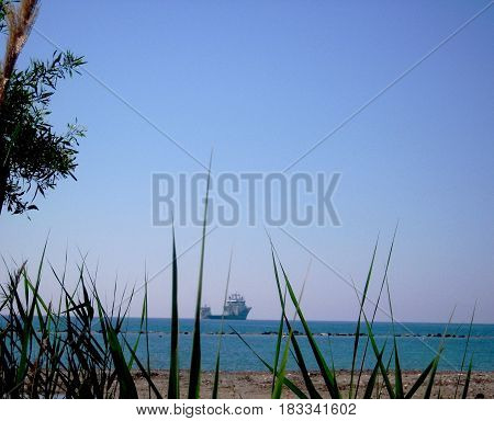 Thickets of reeds and a ship in the distance on the horizon.