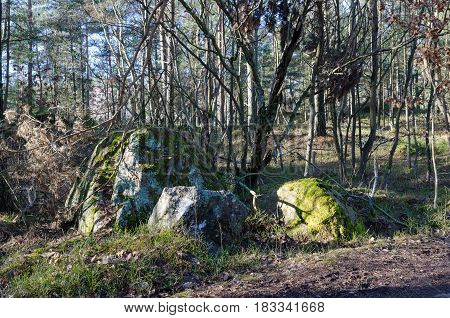 one forrest with two big stone with moss on