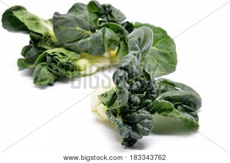 Milk Cabbage Bok Choy