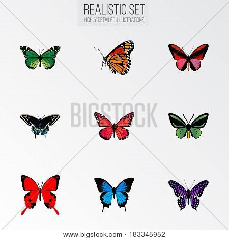 Realistic Azure Peacock, Common Blue, Morpho Hecuba And Other Vector Elements. Set Of Beautiful Realistic Symbols Also Includes Butterfly, Brown, Violet Objects.