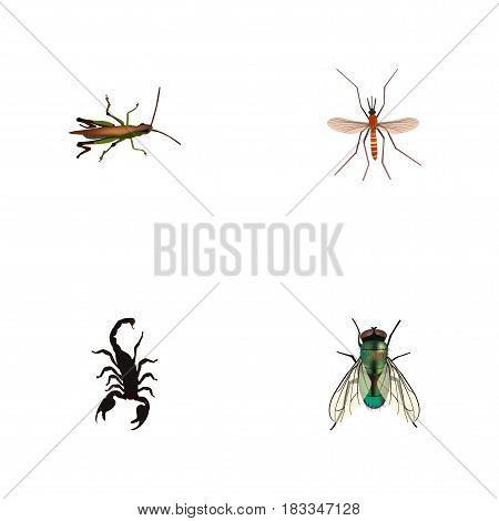 Realistic Housefly, Locust, Poisonous And Other Vector Elements. Set Of Animal Realistic Symbols Also Includes Jewel, Poisonous, Alive Objects.