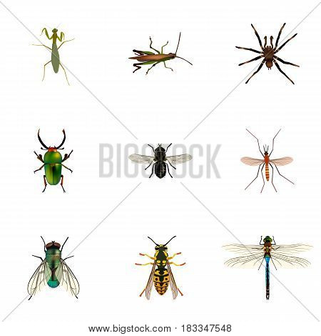 Realistic Grasshopper, Gnat, Damselfly And Other Vector Elements. Set Of Animal Realistic Symbols Also Includes Bee, Insect, Tarantula Objects.