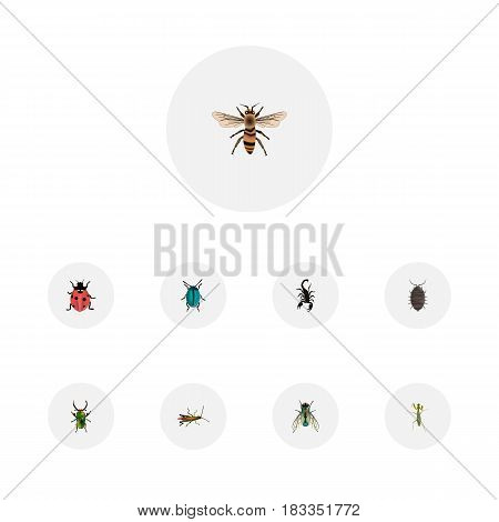 Realistic Ladybird, Dor, Housefly And Other Vector Elements. Set Of Hexapod Realistic Symbols Also Includes Blue, Green, Housefly Objects.