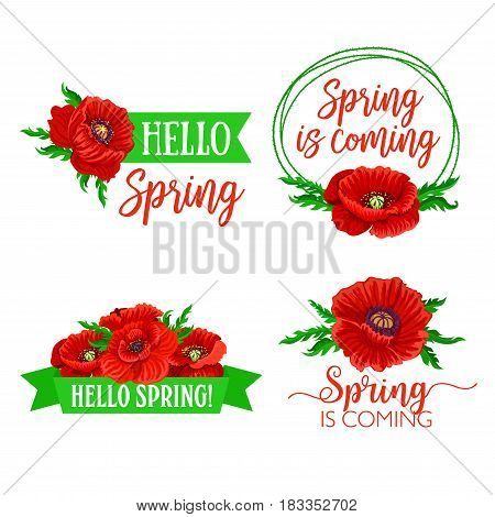 Spring time floral bouquets of red flowers with spring holiday quotes of greeting and wishes. Hello Spring vector design of flourish bunch of poppy blossoms and green springtime ribbons