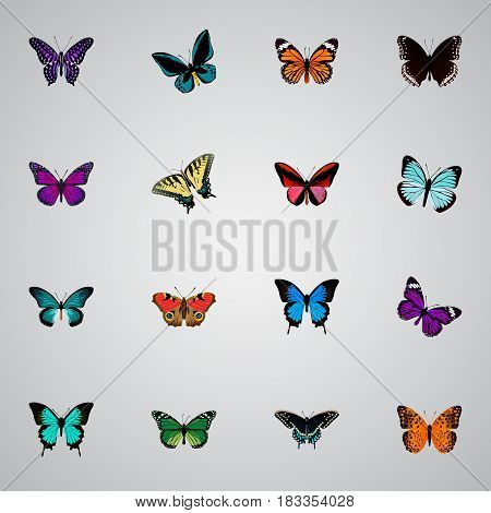 Realistic Butterfly, Lexias, American Painted Lady And Other Vector Elements. Set Of Beauty Realistic Symbols Also Includes Red, Cynosura, Purple Objects.