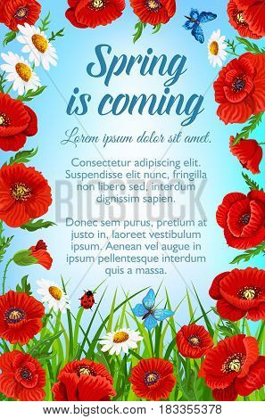 Spring is coming poster for springtime holiday time. Vector design of blooming flowers and green grass with butterflies and ladybug. Bunches and bouquets of red poppy and daisy blossoms in garden lawn