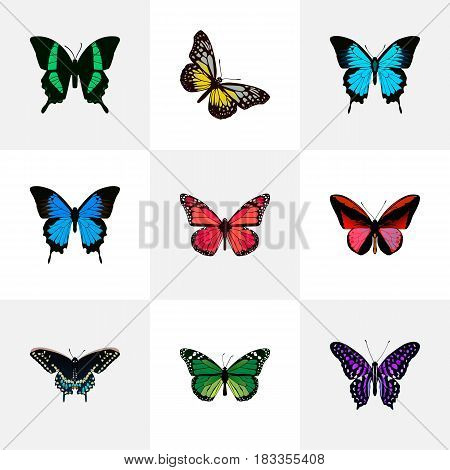 Realistic Papilio Ulysses, Polyommatus Icarus, Morpho Hecuba And Other Vector Elements. Set Of Beauty Realistic Symbols Also Includes Purple, Blue, Pink Objects.
