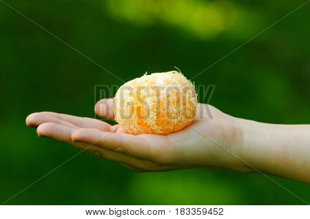 Female hand holding a peeled ponkan fruit