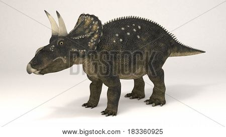 3D Computer rendering illustration of Diceratops dinosaur