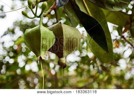 Strange Fruits On A Tree