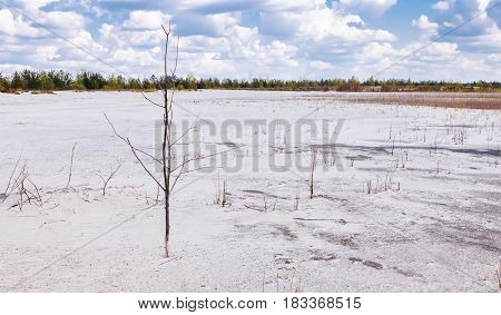 Summer landscape - mine of white quartz sand with reed under beautiful clouds in the blue sky on a clear day.
