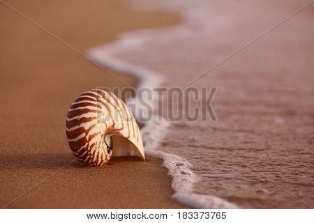 seashell nautilus on sea beach under sunrise sun light, Canary island, Spain