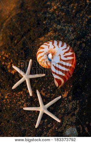 seashell nautilus on stone beach under sunrise sun light, Canary island, Spain