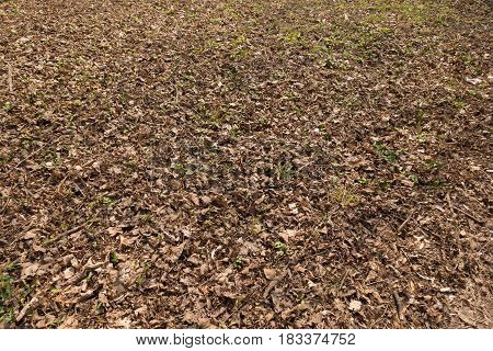 Forest glade covered with dull fallen leaves
