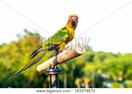 Parrot lovely bird animal and pet at the natural park
